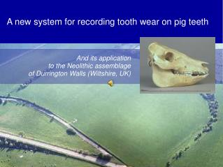 A new system for recording tooth wear on pig teeth
