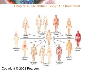 Chapter 1: The Human Body: An Orientation