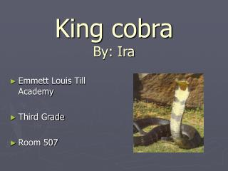 King cobra By: Ira