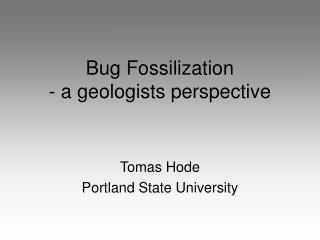 Bug Fossilization  - a geologists perspective