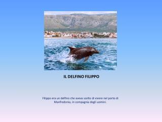 IL DELFINO FILIPPO