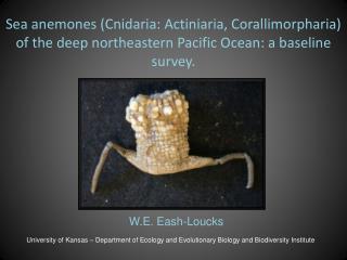 Sea anemones (Cnidaria: Actiniaria, Corallimorpharia) of the deep northeastern Pacific Ocean: a baseline survey.