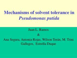 Mechanisms of solvent tolerance in  Pseudomonas putida