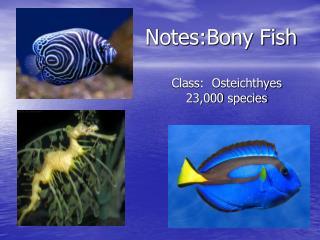 Notes:Bony Fish