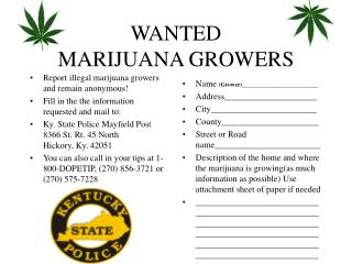 WANTED MARIJUANA GROWERS