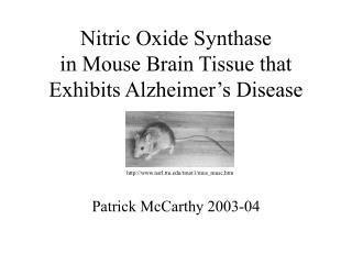 Nitric Oxide Synthase in Mouse Brain Tissue that Exhibits Alzheimer's Disease