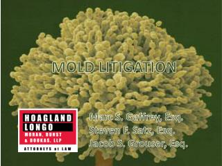 MOLD LITIGATION 			Marc S. Gaffrey, Esq. 			Steven F. Satz, Esq. 			Jacob S. Grouser, Esq.