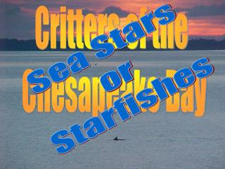 Critters of the  Chesapeake Bay