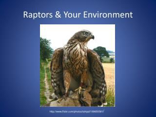 Raptors & Your Environment