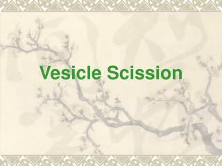 Vesicle Scission