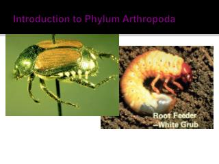 Introduction to Phylum Arthropoda