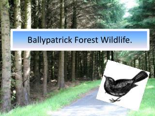 Ballypatrick  Forest Wildlife.