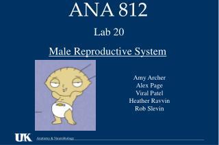 ANA 812