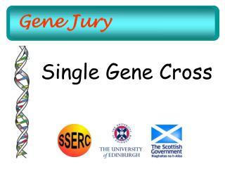 Gene Jury
