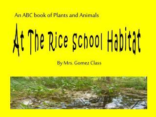 At The Rice School Habitat