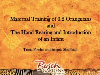 Maternal Training of 0.2 Orangutans  and  The Hand Rearing and Introduction of an Infant