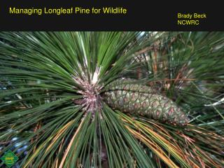Managing Longleaf Pine for Wildlife