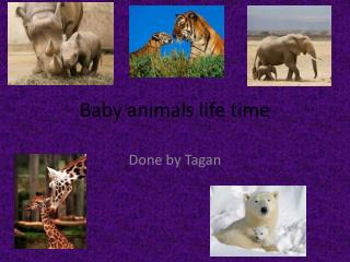 Baby animals life time
