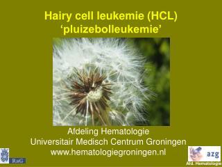 Hairy cell leukemie (HCL) 'pluizebolleukemie'