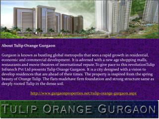 Tulip Orange in Gurgaon