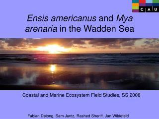 Ensis americanus  and  Mya arenaria  in the Wadden Sea