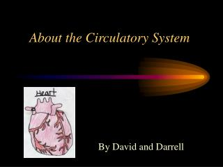 About the Circulatory System