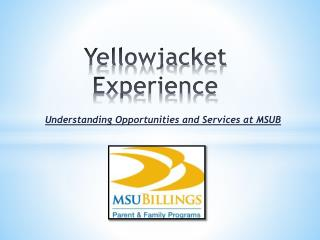 Yellowjacket  Experience