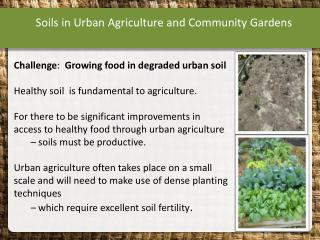Soils in Urban Agriculture and Community Gardens