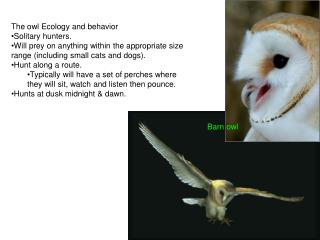 The owl Ecology and behavior Solitary hunters.