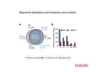 K Prüfer  et al. Nature 000 ,  1-5  (2012) doi:10.1038/nature11128
