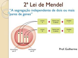 2ª Lei de Mendel