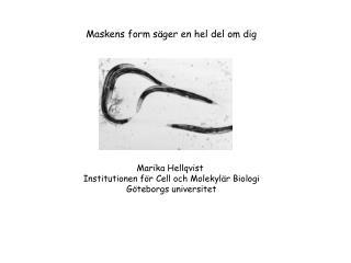 Maskens form säger en hel del om dig Marika Hellqvist