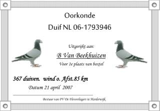Oorkonde Duif NL 06-1793946