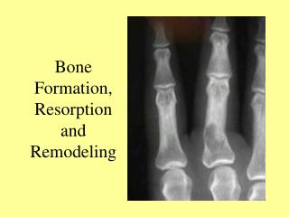 Bone Formation, Resorption and Remodeling