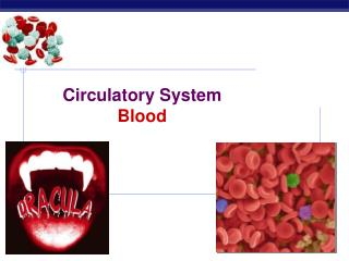Circulatory System Blood