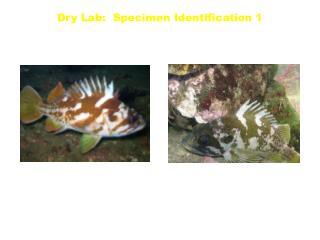 Dry Lab:  Specimen Identification 1