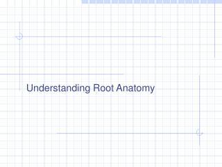 Understanding Root Anatomy