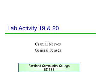 Lab Activity 19 & 20