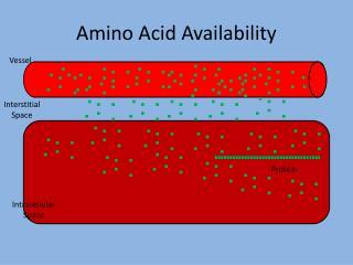 Amino Acid Availability