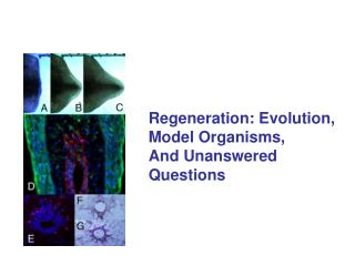Regeneration: Evolution, Model Organisms, And Unanswered Questions