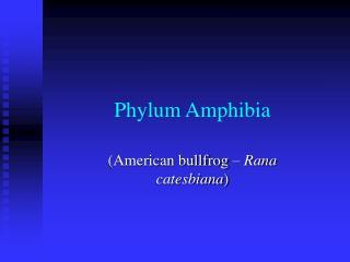 Phylum Amphibia