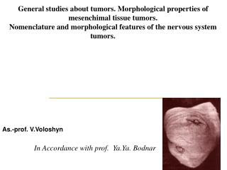 General studies about tumors. Morphological properties of mesenchimal tissue tumors.