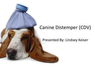 Canine Distemper (CDV)