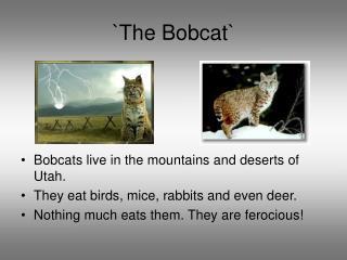 `The Bobcat`