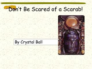 Don't Be Scared of a Scarab!