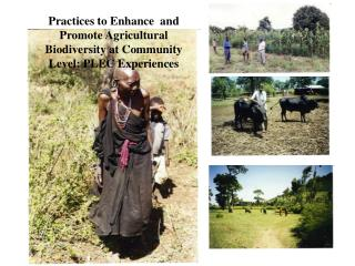 Practices to Enhance  and Promote Agricultural Biodiversity at Community Level: PLEC Experiences