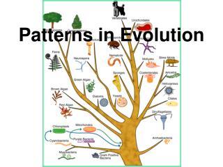 Patterns in Evolution