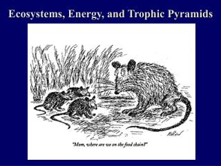 Ecosystems, Energy, and Trophic Pyramids