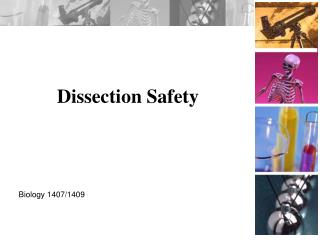 Dissection Safety