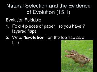 Natural Selection and the Evidence of Evolution (15.1)